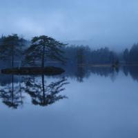 Sågspån och vattenspeglar