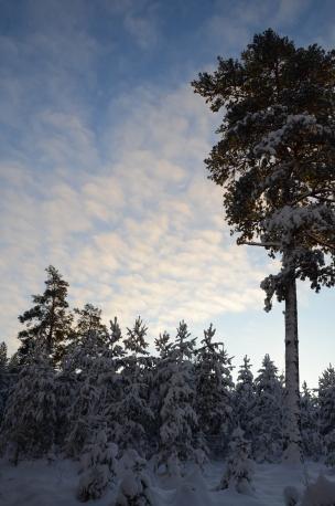 Vackert Snölandskap