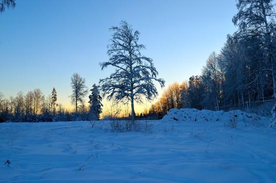 Ett träd i solen