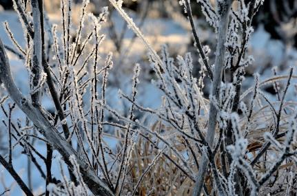 Kristaller på busken