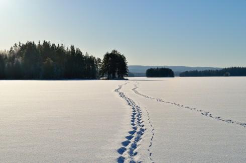 Spåren från vår isvandring