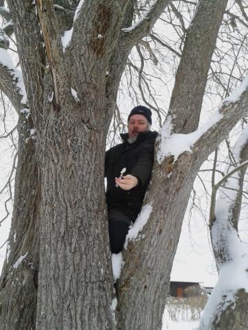 Hasse i trädet