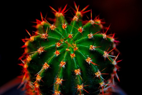 Emils kaktus