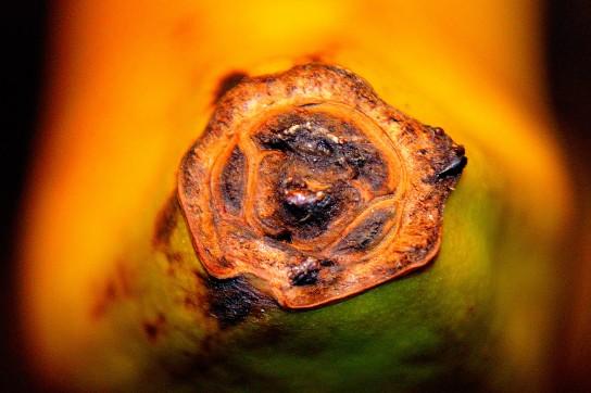 En vanlig banan