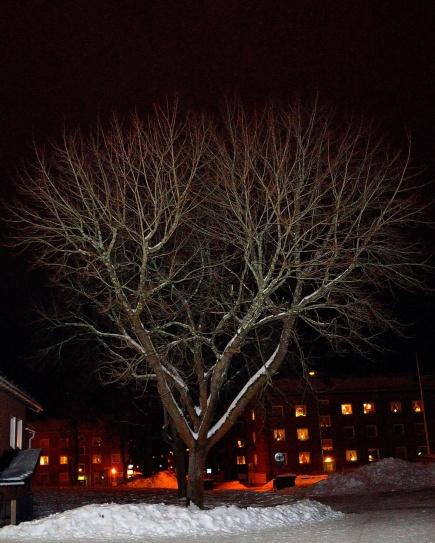 Det fina trädet