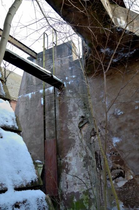 Växande träd i de gamla ruinerna