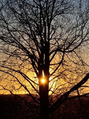 Kvällssolen i trädet