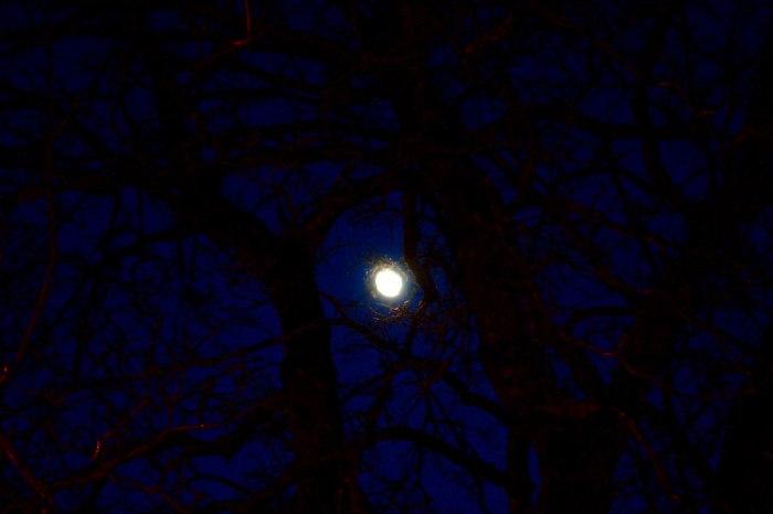 Måne mellan grenarna