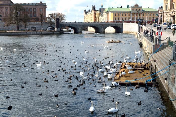 Full fart i Stockholms ström
