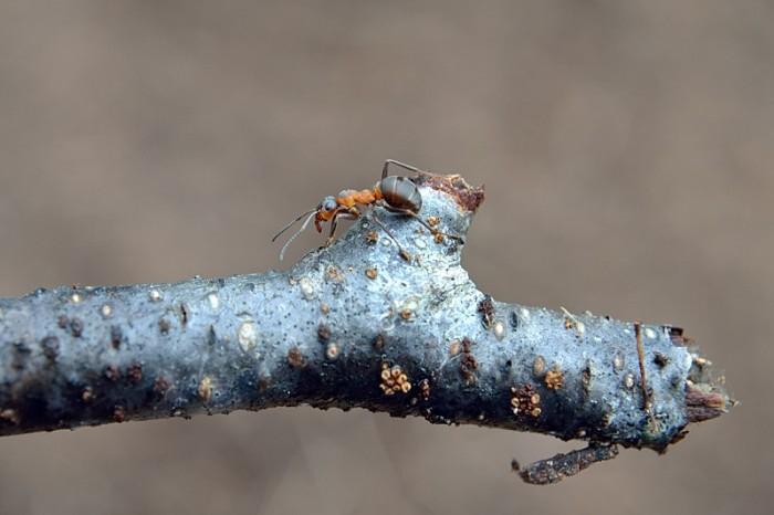 Möte med en myra