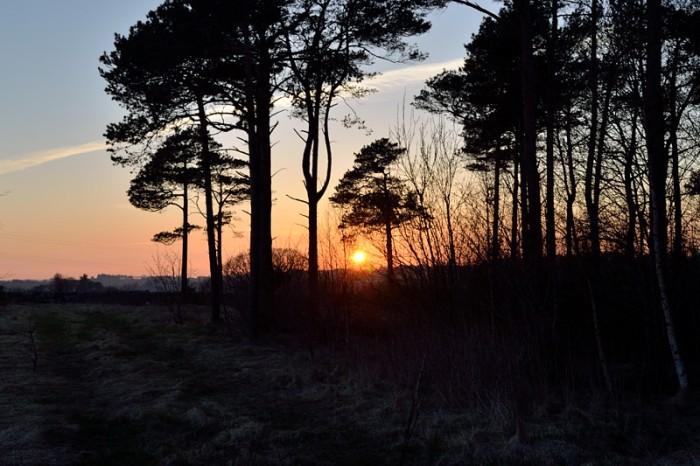 Kväll i Vølstadskogen