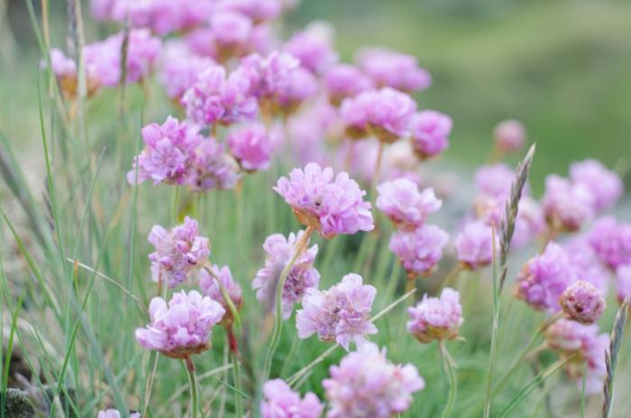 Ferdinands blommor