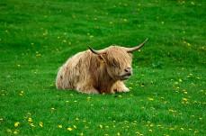 Cool ko med frisyr
