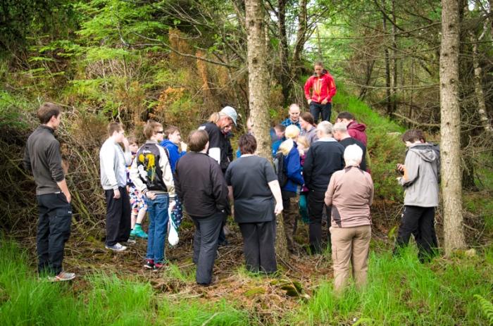 Mass-logg i skogen
