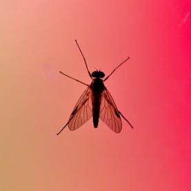 Insekt på fönstret