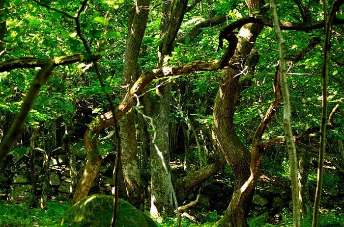 Invånare i Trollskogen