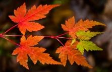 Höstens vackraste löv