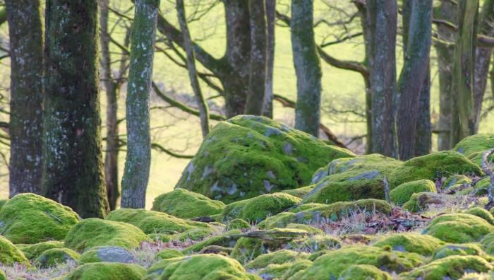 Mossigt grönt