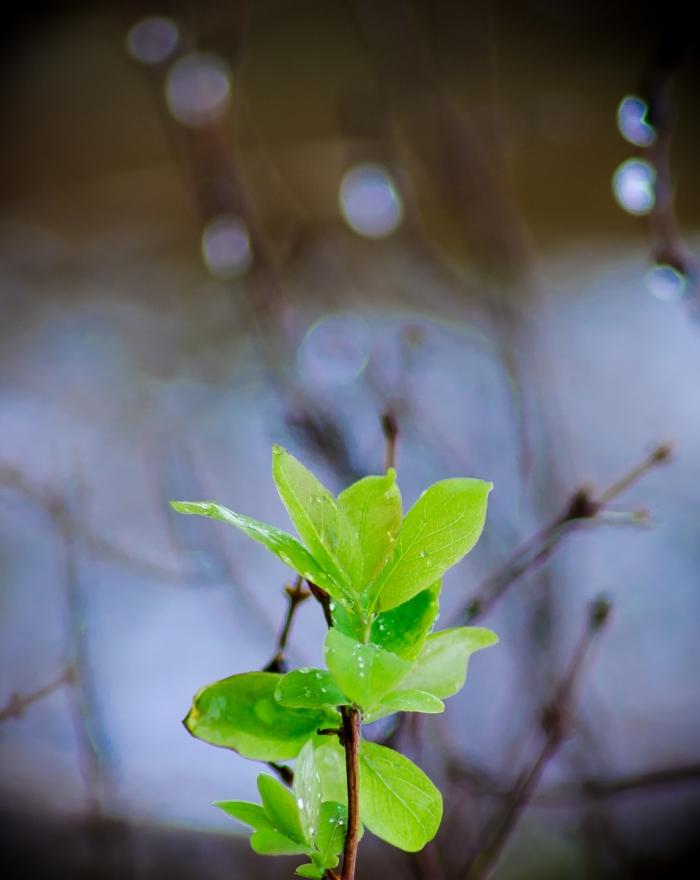 Gröna blad med regndroppar