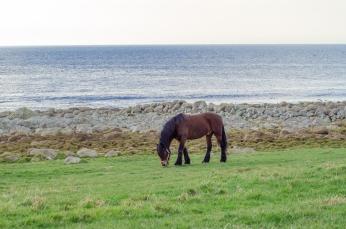 En häst på Jæren