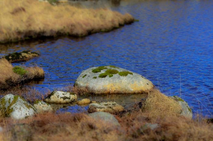 Mossig sten i sjön
