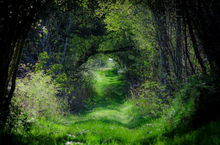 En tunnel av grönt