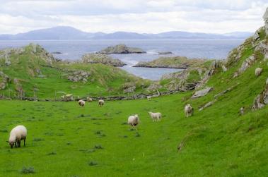 Landskap med får