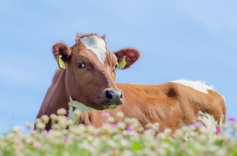 Vilken blick från en ko