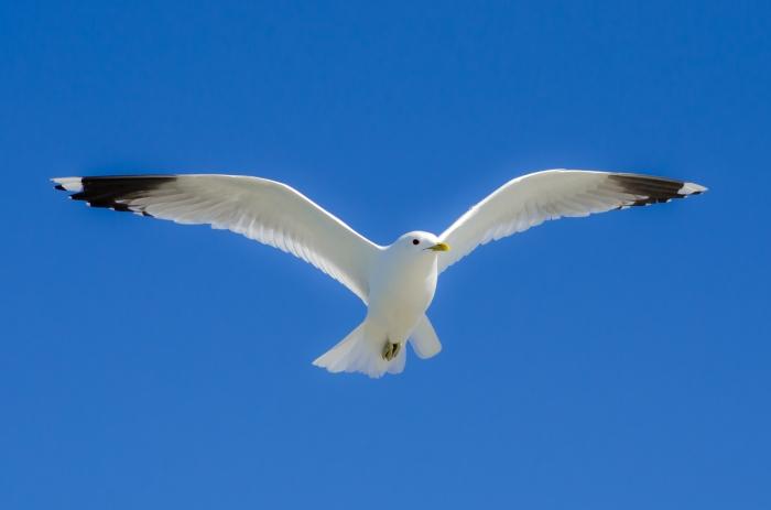 Fångar vinden