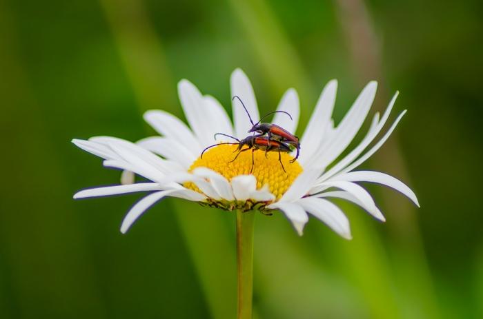 Insekts-Kärlek