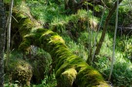 Lummig skog