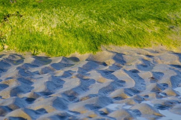 Vågor i sanden