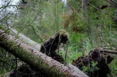 Kurar mellan träden