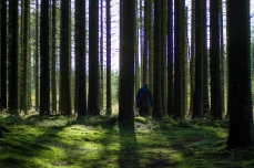 Njåskogen