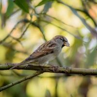 Fåglar i Allhelgona