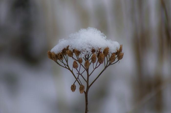 Mössa av snö