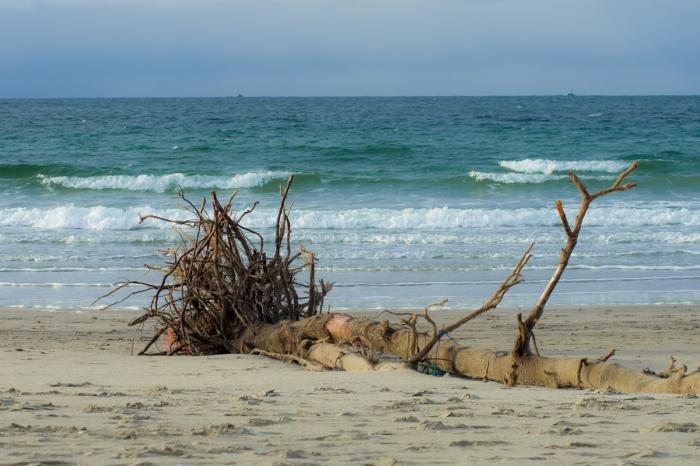 Ett strandat träd
