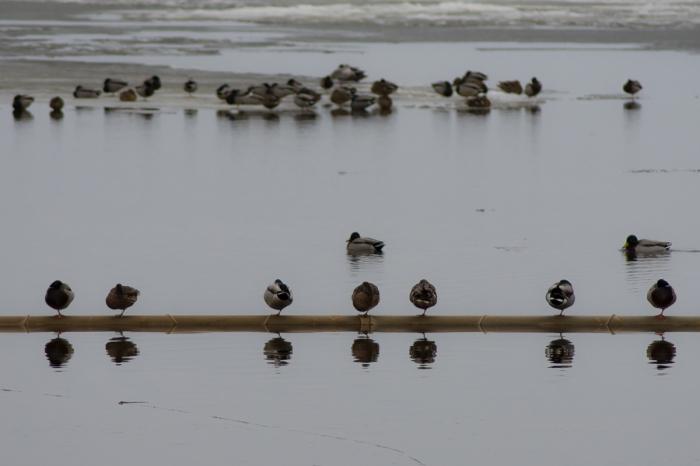 På rad och på is
