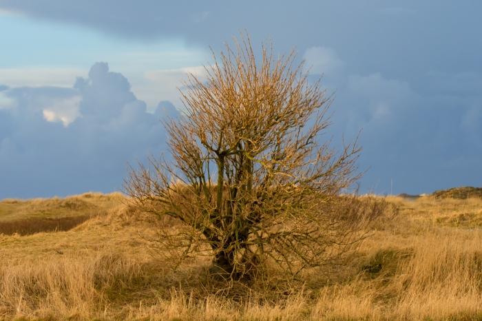 Träd vid strandängarna