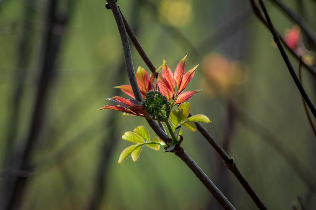 Blommor och blader