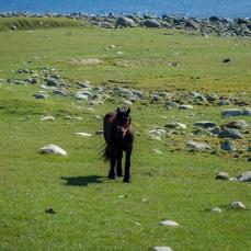 En häst i hagen