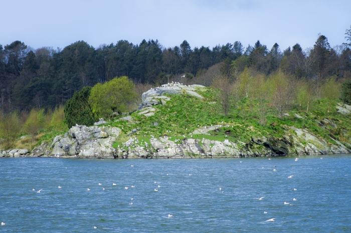 Måsarnas ö