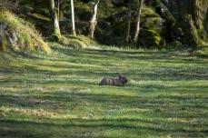 Kanin på Egerøy