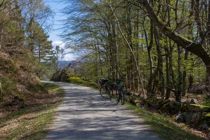 Cyklar i vårgrönt