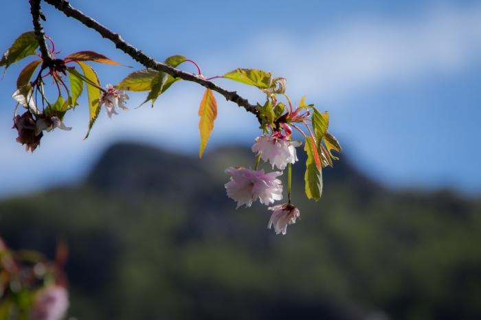 Blommor och berg