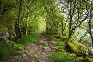 Sælandskogen