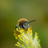 Bland blommor och insekter