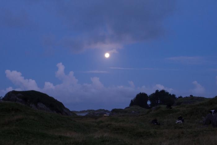 Månljus natt i Ogna