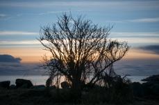 Träd med bihang