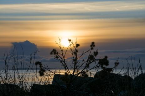 Tistlar i solnedgången
